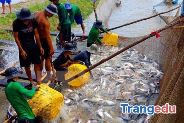 cơ hội việc làm ngành nuôi trồng thủy sản